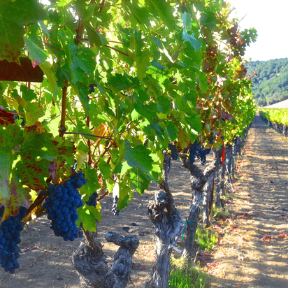 Bay Area Experience: Private Tour for Two - Napa Valley Hike & Wine